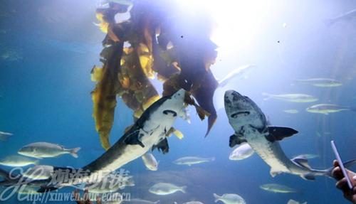 采购了多种名贵海洋动物,其中包括珊瑚25种,海葵3种,海蟹1种,海胆2种